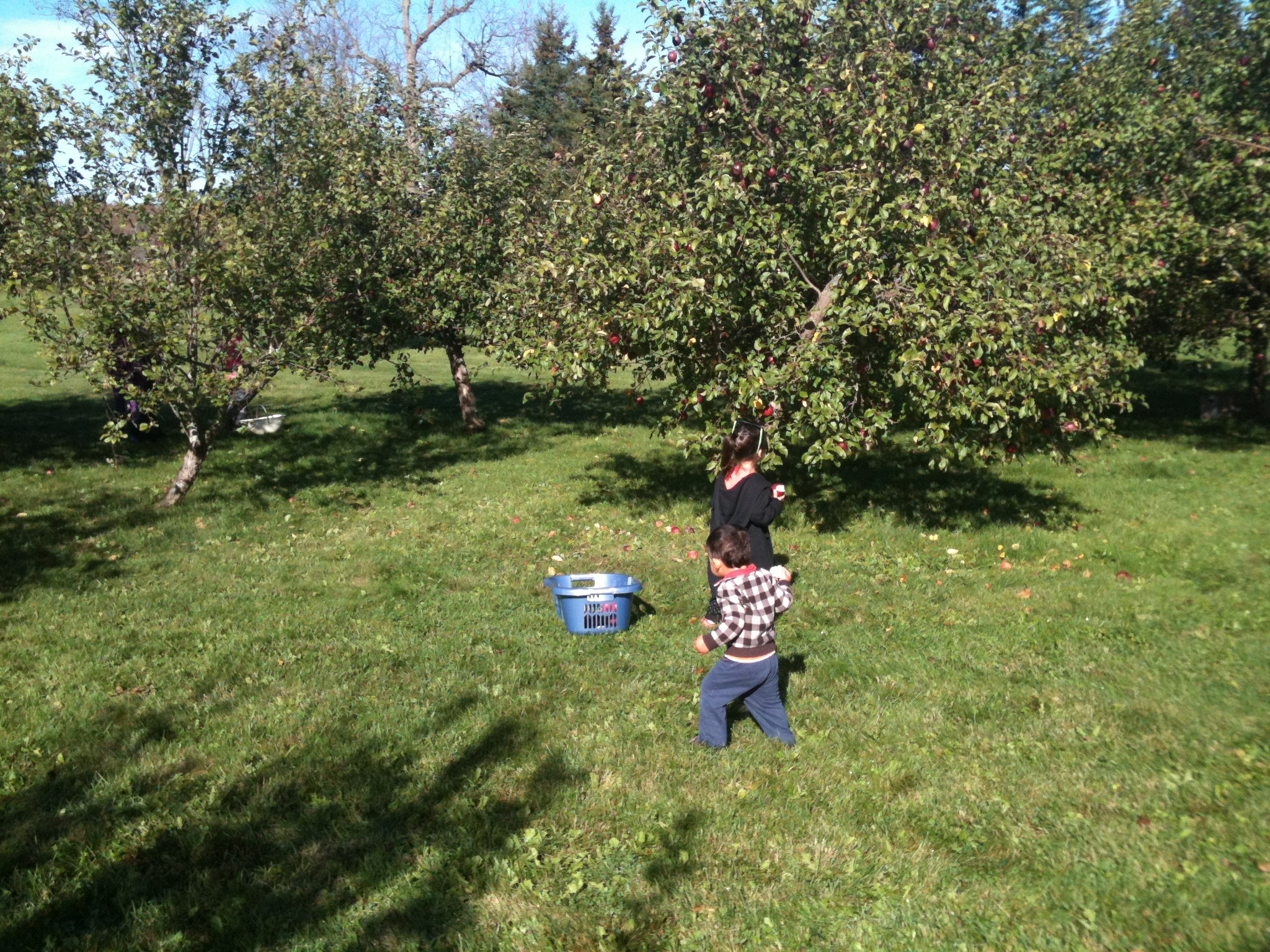 A 4-year-old girl and 2-year-old boy pick apples at an orchard.