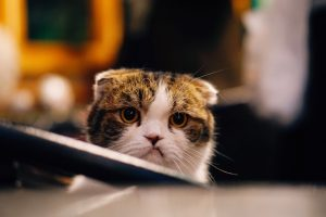 Frustrated cat, Photo by FuYong Hua on Unsplash