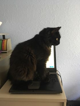 A black cat sitting on top of a laptop.